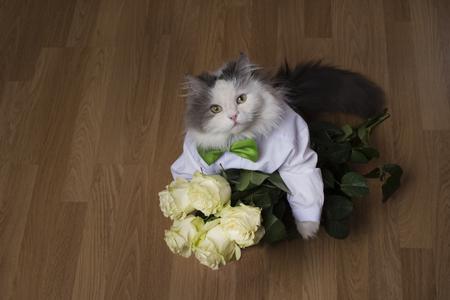 猫の贈り物としてバラの花束をもたらした 写真素材
