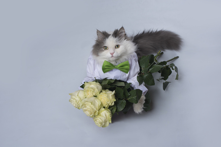 Cat brought a bouquet of roses as a gift