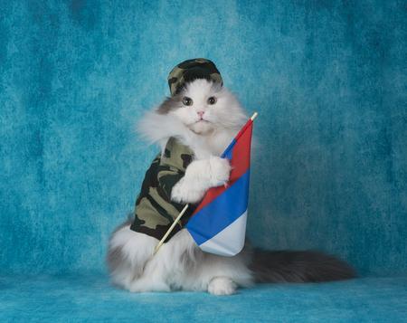 ロシア国旗の軍用スーツの中の猫 写真素材