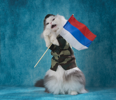 Cat in a military suit with a Russian flag