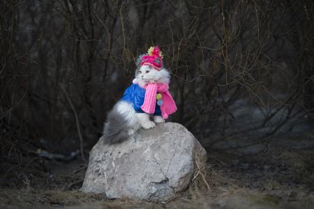 暖かい服を着て春を待っている猫