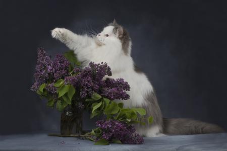 ライラックの花束と猫します。