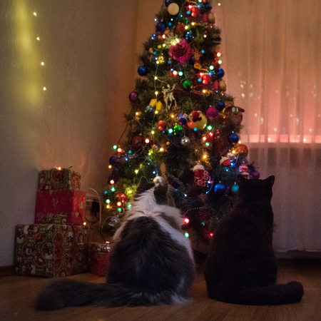 cats are getting ready for the new year
