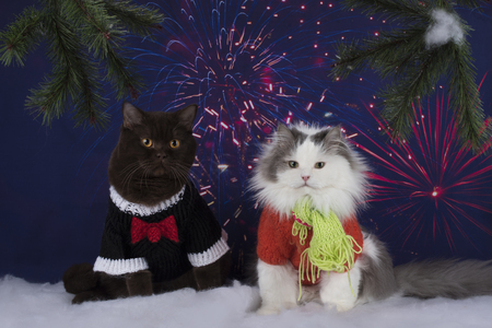 cats celebrate the new year Stock Photo