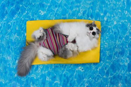 Katze ruhen im Pool auf der Luftmatratze