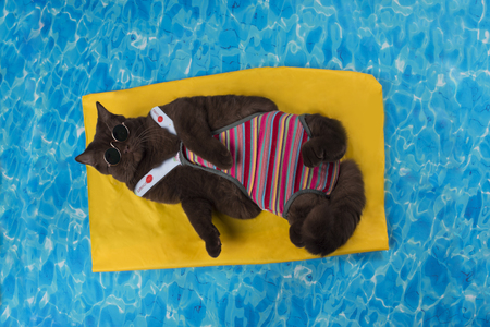 cat rest in the pool on the air mattress Foto de archivo - 95379977