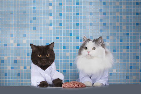 cats surgeons discuss brain surgery