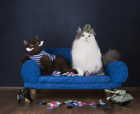 two cats choose socks sitting on the couch Stock Photo
