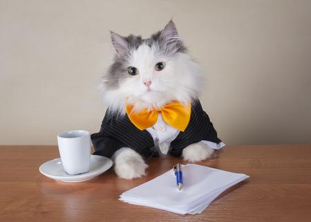 Katzenmanager in einem Anzug, der im Büro sitzt