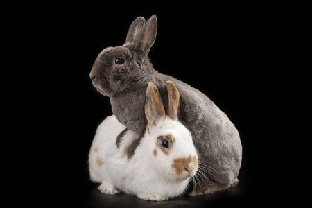 rabbit on black isolated background