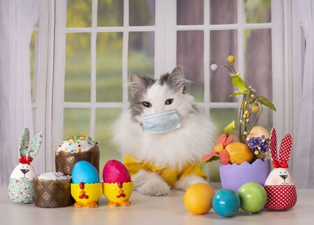 white fluffy cat in a medical mask during quarantine sits alone at the easter table against the background of the window Фото со стока