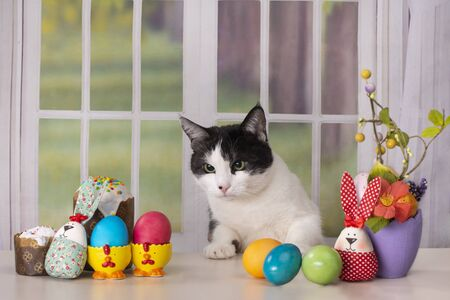 cat is sitting at the easter table against the background of the window