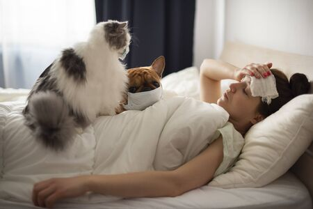 A young girl is lying in bed with heat, her French bulldog and a fluffy cat helps her. Coronovirus patient