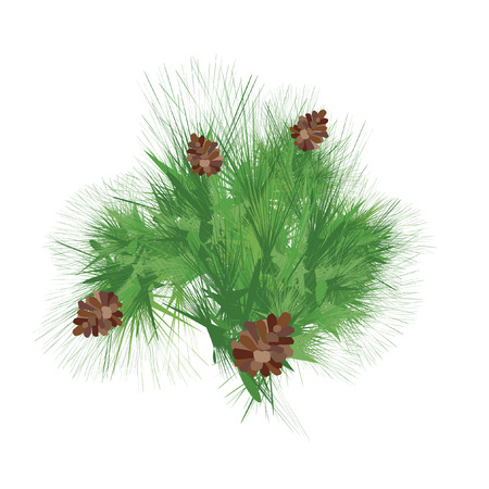 pinnacle: Green pine cones with branches  Vector isolated on white background