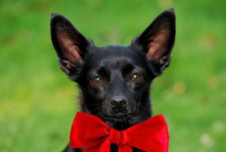 dog Stock Photo - 17134185
