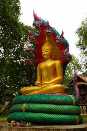 Golden Bhuddha sat under a snake with seven heads  photo