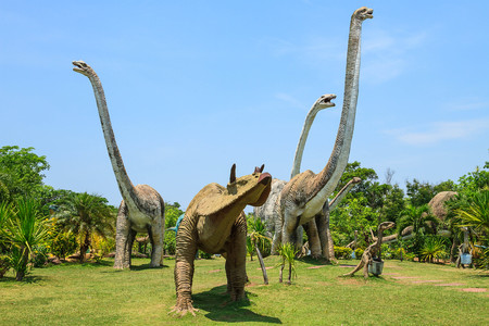 Phuwiangosouraus  Sirindhornae Was discovered in Thailand since the year 1982 is a long-necked dinosaur  lived in the  cretaceous  when 130  million years ago. Stock Photo