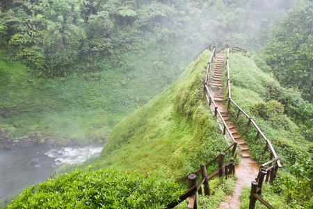 tropical evergreen forest: Pathway  on  the  top  of  the  hill Stock Photo