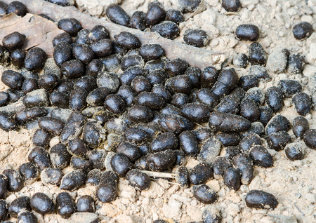 droppings: In the forest deer living, we can see deer droppings in that area.
