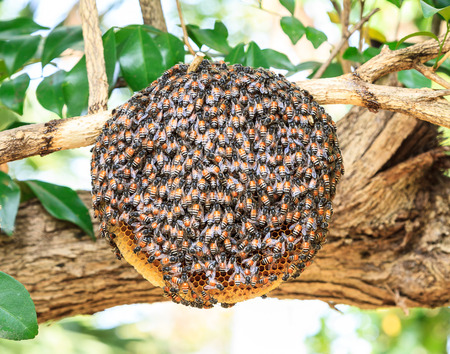 worker bees: Worker bees are helping to build a nest.