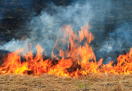 burns: Wildfire burns spreading hay in a field.