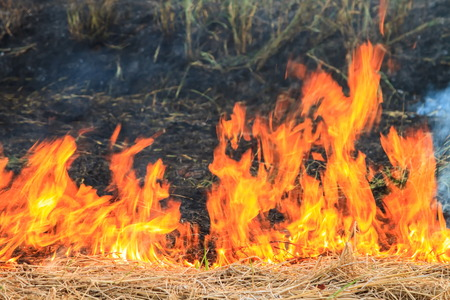 explotion: Wildfire burns spreading hay in a field.