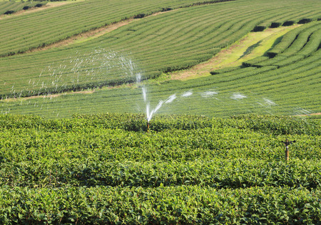 swirled: The water swirled in the tea plantations  northern Thailand.