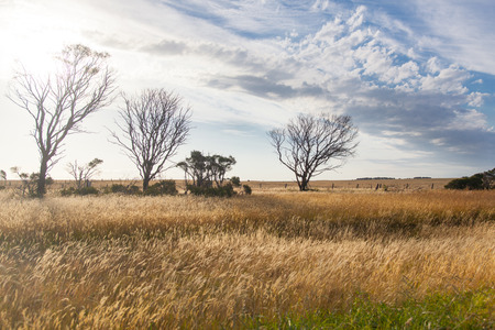Several dry trees in a vast field of dry grass in New South Wales, Australia.
