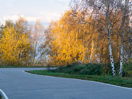 leafed: Narrow road through park amongs yellow-leafed birch trees