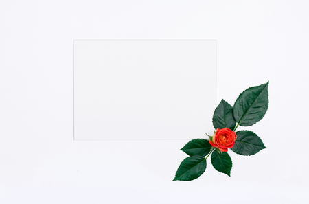 One roses with rose petals and a blank white card on white background, Top view. Flat lay Stock Photo