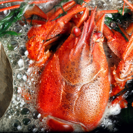Boiled crayfish with dill and bay leaf in boiling water in saucepan on black Imagens
