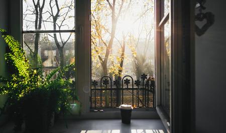Mano maschile che tiene una tazza di caffè al sole del mattino contro la finestra