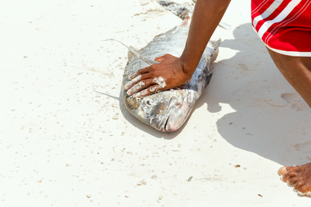 Man cleans fresh tuna fish freshly caught in the ocean on the sandy shore