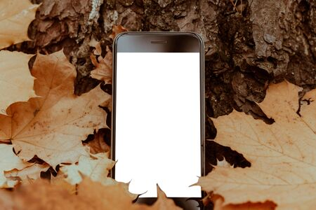 Smartphone in the autumn leaves. Mockup blank white phone screen 스톡 콘텐츠