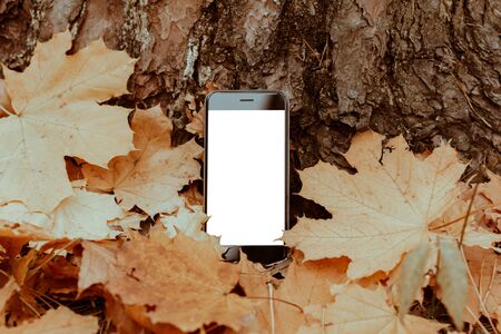 Smartphone in the autumn leaves. Mockup blank white screen cell phone