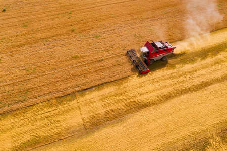Aerial view of combine harvesting ripe wheat on the field