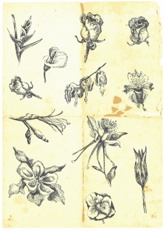 Hand drawn a large collection of different flowers   Vector