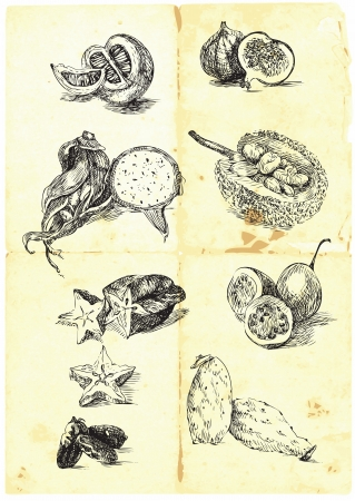 Hand drawn a large collection of seasonal fruits and vegetables  Vector