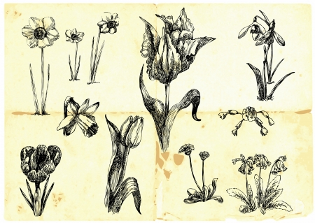 intoxicating: Hand-drawn collection - flowers Illustration