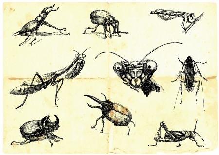 Hand-drawn collection  Beetles and insects