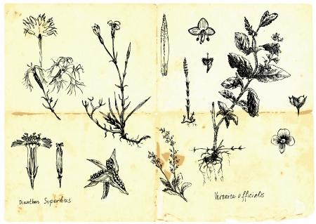 Hand-drawn collection - herbes médicinales et de fleurs sauvages