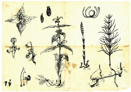 intoxicating: Hand-drawn collection - medicinal herbs and wild flowers
