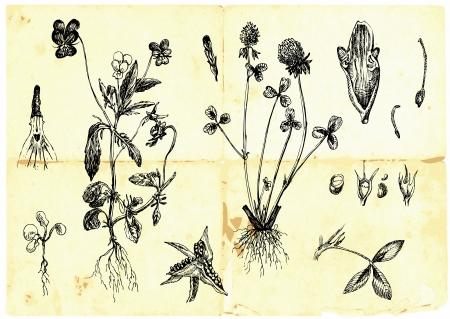 손으로 그린 컬렉션 - 약초와 야생 꽃