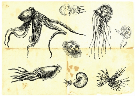 Hand-drawn collection  Marine life - SEA MONSTERS   Vector