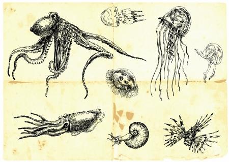 plankton: Recolecci�n a mano que la vida marina - Monstruos Marinos
