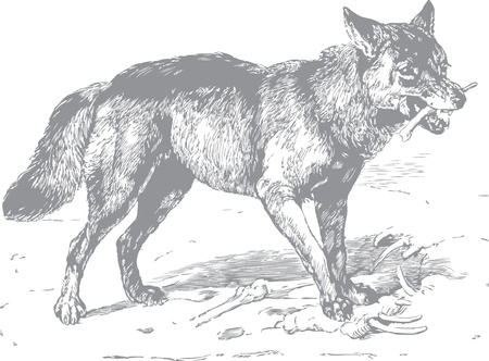 archaically: Wolf with bone in mouth, hand drawing Illustration