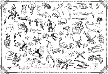 large collection   the animals Vector