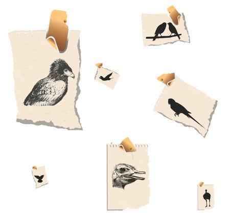 birds from africa Stock Vector - 14422774