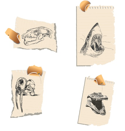 bloodthirsty: A series of bloodthirsty predators and their skulls  Illustration