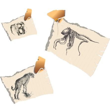 Animals - predators  A series of detailed drawings Stock Vector - 14422788